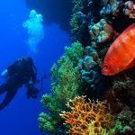 Rimini, nuove guide turistiche. Arriva il tour subacqueo