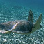 I cittadini diventano ricercatori, arriva il portale di citizen science nelle aree marine protette Regno di Nettuno e Punta Campanella