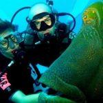 Scopri l'Australia e le sue meraviglie sommerse