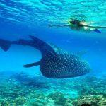 Immergersi nei mari più belli del mondo