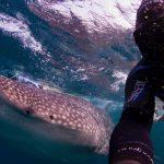 Un viaggio per nuotare al fianco di squali balena con WWF Travel
