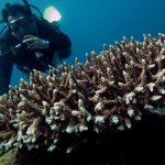 Allarme corallo: pescatori di frodo nel paradiso dei sub a Calafuria