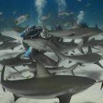 Cristina Zenato, la donna che balla con gli squali