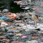 Plastica, emergenza ambientale